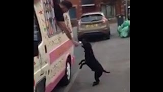 Dog Can't Contain His Excitement For The Ice Cream Truck
