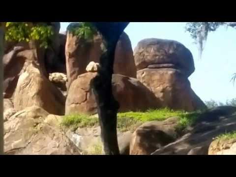 Hollywood studies safari ride