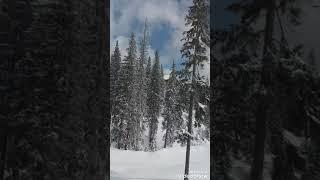 драгобрат горнолыжный курорт снег природа Драгобра т горнолыжный курорт Украины