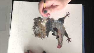 Possum. Drawing by Elena Sedova, seelena.com