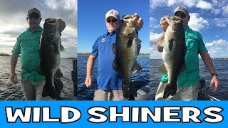How To Catch Bass with Wild Shiners - Lake Toho / Kissimmee Largemouth Bass
