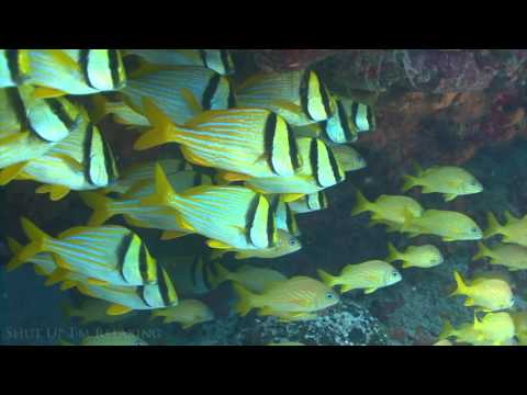 Uplifting Piano Music to Schooling Fish for Study and Relaxation