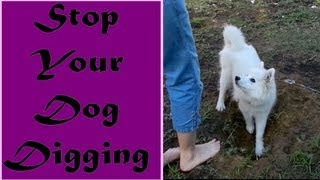 Stop Your Dog Digging