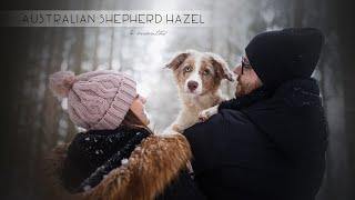 Hazel  Australian Shepherd puppy [4 months]