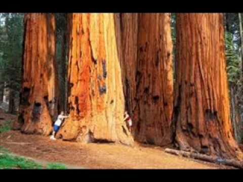 bucheron coupe les branche d 39 un arbre g ant a la tronco doovi. Black Bedroom Furniture Sets. Home Design Ideas