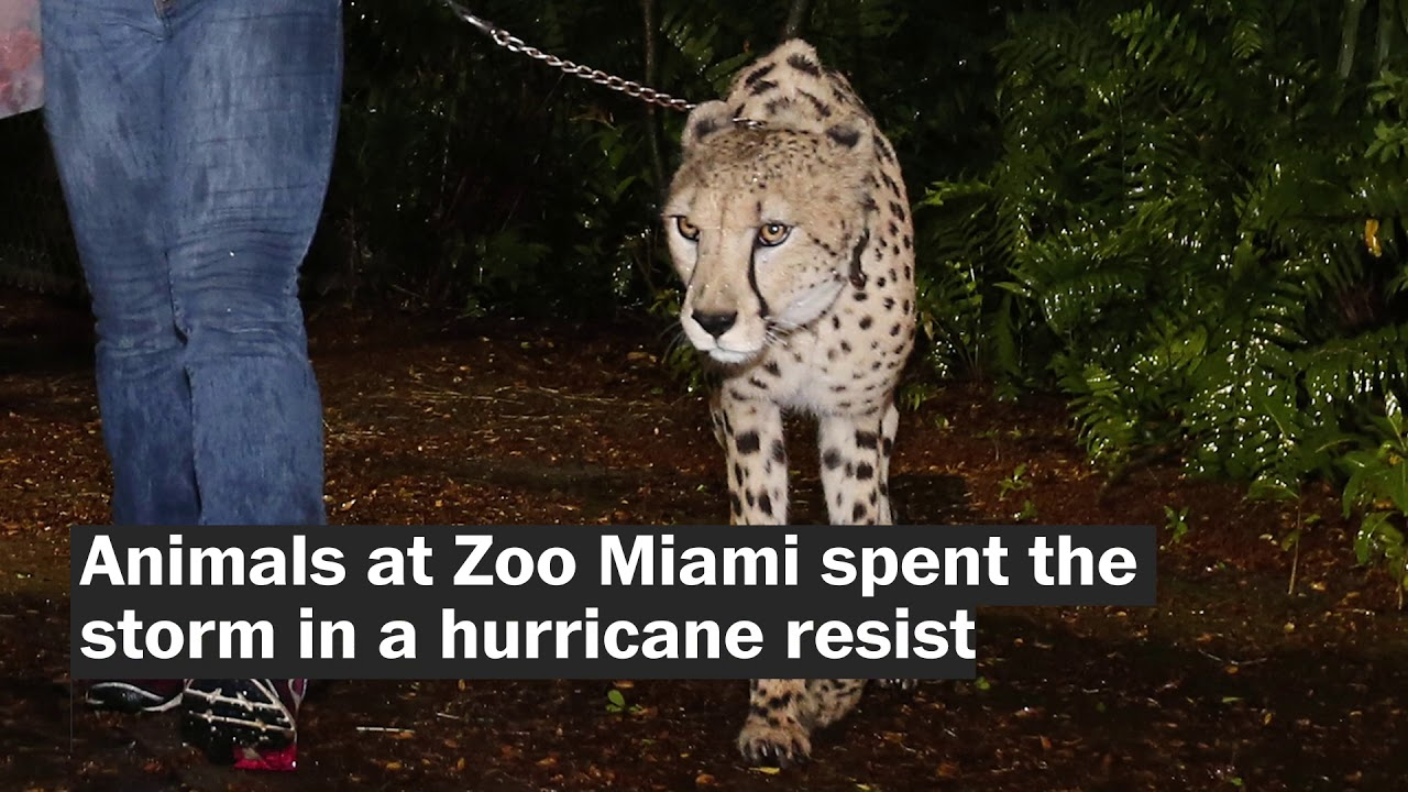 how-animals-remained-safe-during-hurricane-irma