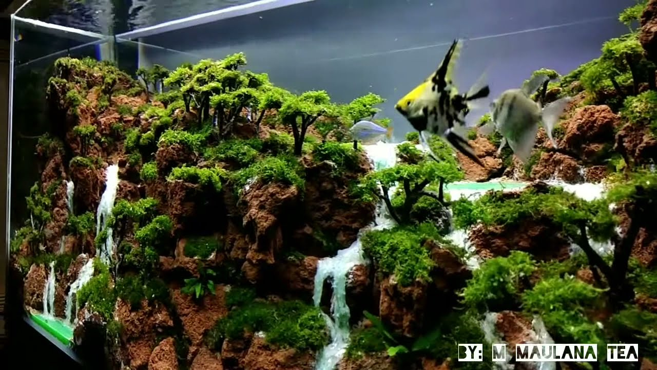 Layout Aquascape Indonesian Style Youtube