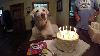 Levi's 12th birthday