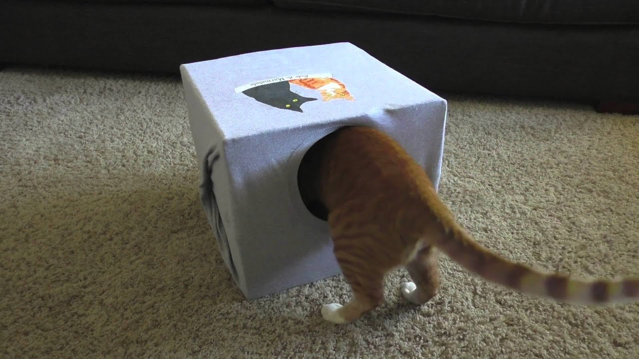 How To Make a CAT CAVE