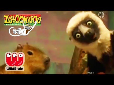 Zoboomafoo   Episode: Lemur Explores Zoo Animals   Animals For Kids