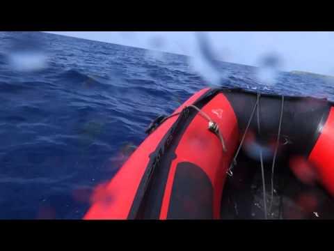 Day 12 dolphin Salomon Atoll