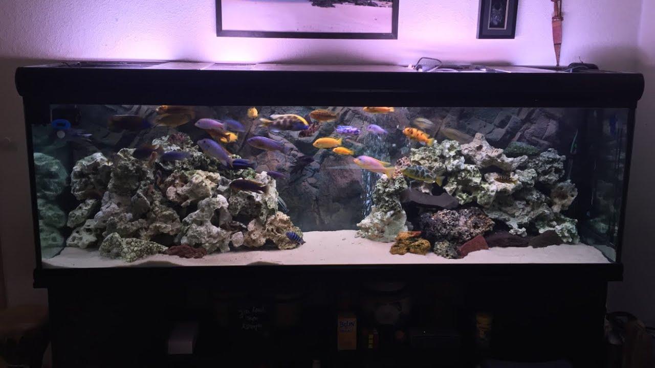 Mon 600l avec changement de sable nettoyage mon 450l for Aquarium 600l
