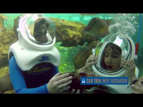 Sea Trek Reef Encounter - Video