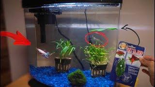 MAJOR BETTA FISH TANK REMODEL!!!