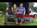 Murai Batu Grandong Raih Juara   Mp3 - Mp4 Download