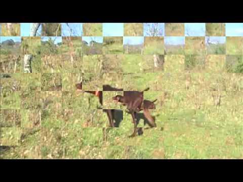 Reportaje fotos de caza de codornices