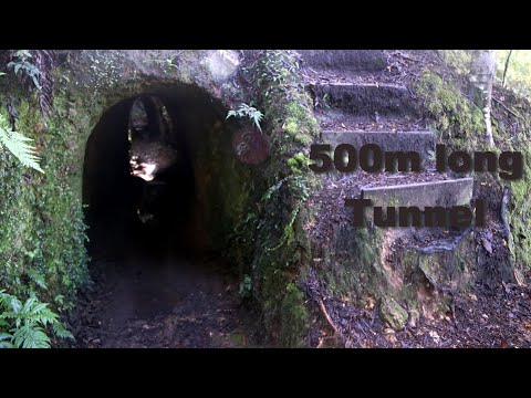 Collins Drive, Tunnel For Gold Mining, Coromandel - One Year In New Zealand #9