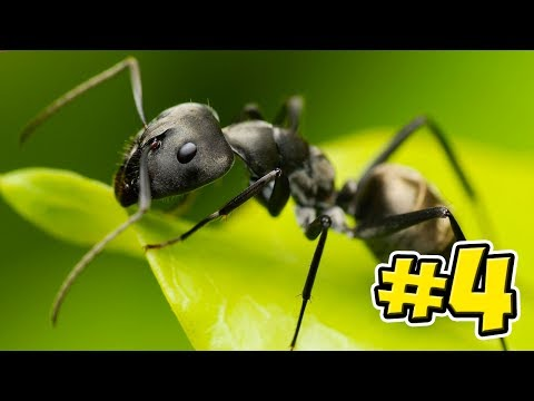 Ant Sim The Endless Horror! - Empires Of The Undergrowth - Ep4