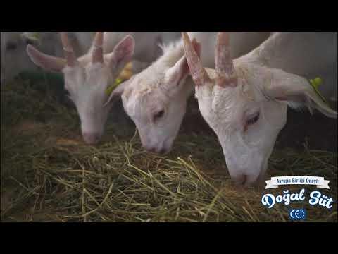Ali Baba Süt Ve Süt Ürünleri Tanıtım Filmi