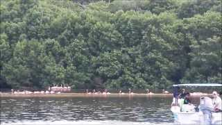 Celestún Yucatán, Reserva de la Biósfera, Paraiso de los Flamingos