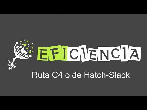 RUTA C4 O DE HATCH-SLACK