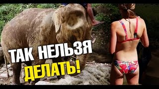 Правда про Шоу Слонов в Таиланде! Грязевые ванны. Я нелепо выгляжу.