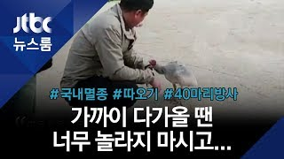 """""""따옥~ 따옥~"""" 사람 좋아하는 따오기 '혹독한 첫 겨울' / JTBC 뉴스룸"""