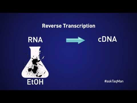 Should You Dilute CDNA For Real-time PCR? -- Ask TaqMan® Ep. 11 By Life Technologies