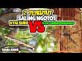 Masteran Perkutut Lokal Suara Besar Jernih  Mp3 - Mp4 Download