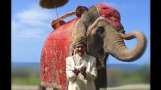 Elephant Wedding Dove 714 903 6599