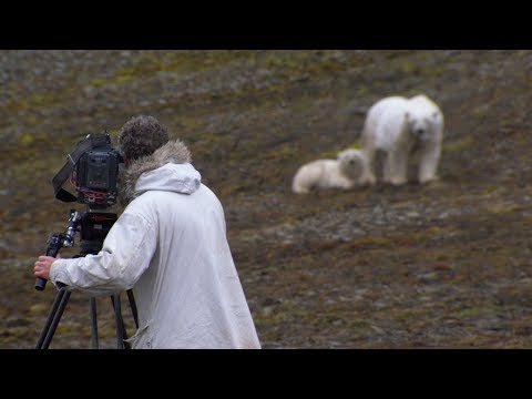 Hungry Mother Polar Bear And Cub Stalk The Film Crew | BBC Earth