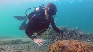 Baixar Dreaming - Underwater Symphony