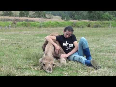 Pet Dromedary Camel - Cherry Jaynie