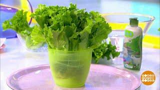Жить здорово! Зеленый салат. 02.10.2018