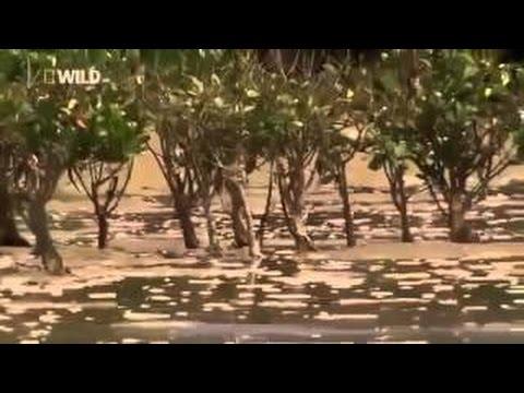 Dangerous Animals STRANGE CREATURES OF THE DEEP OCEAN Animals Wildlife Nature documentary