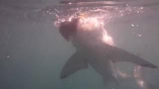 White Shark Attack cage diving