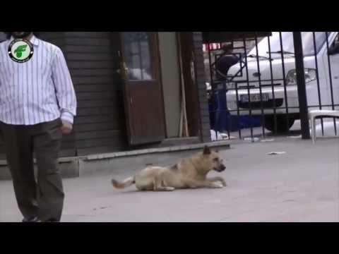 أحلام المستقبل السوري - الحلم الرابع عشر(( الكلاب الشاردة ))