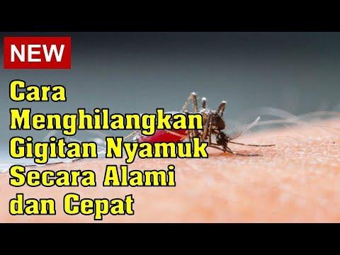 cara-menghilangkan-gigitan-nyamuk-secara-alami-dan-cepat