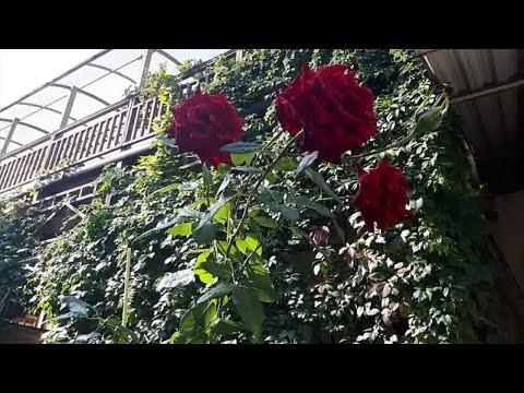 ОСЕННИЕ ЗАРИСОВКИ СЕНТЯБРЯ. Осенние цветы / Autumn sketches SEPTEMBER'S. Autumn flowers /22 сентября