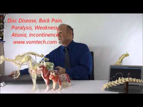 Information on Disc Disease, Back Pain, Paralysis, Paresis, Rear Leg Weakness, Incontinence