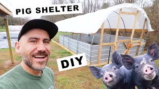 How to BUILD a PIG SHELTER (Small Scale) + COST