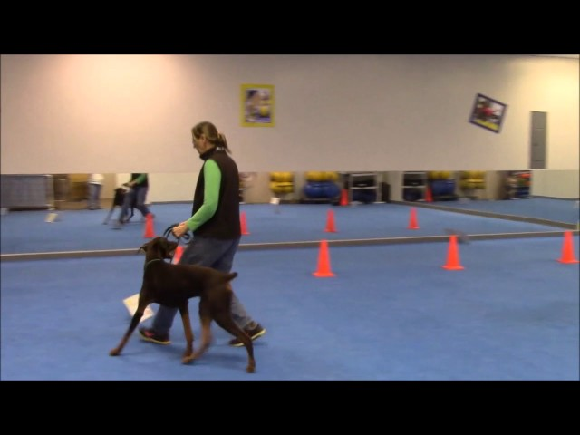 BaeBea's Dog Training - Barney Rally Practice