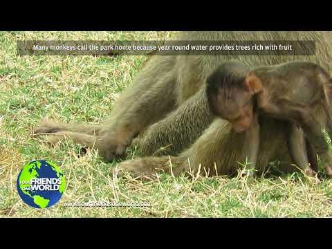 Lake Manyara Monkeys