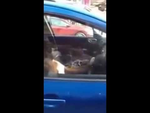 Never Leave Your Dog Inside A Car│Viral Video