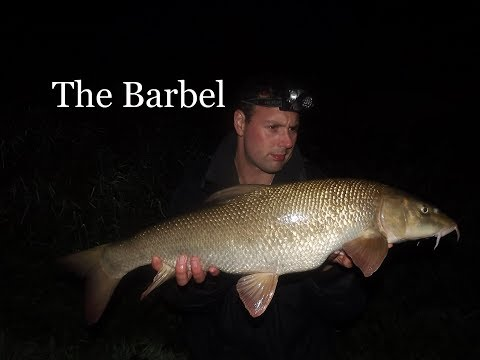 Barbel On The River Trent