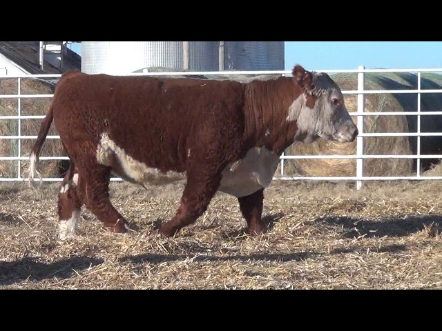 Express Ranches Lot 233