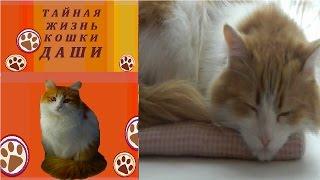 Эксперимент №6. Сколько спит кошка Даша?