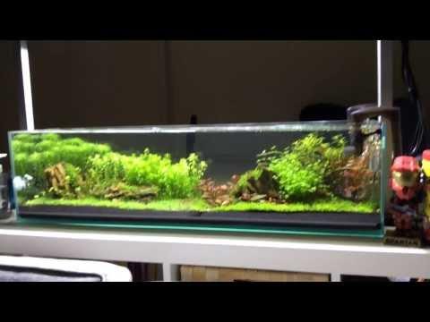 Mr Aqua 12g Long Aquarium