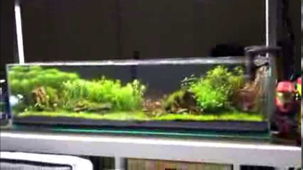 Mr Aqua 12g Long Aquarium Youtube