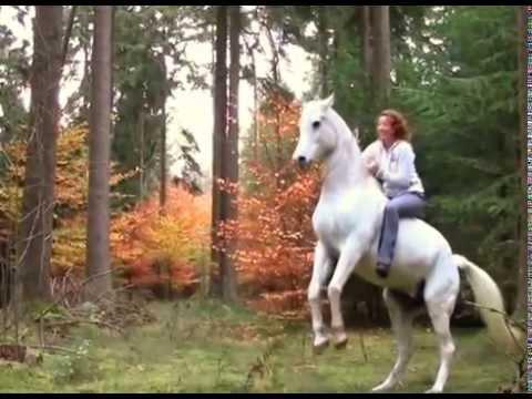 Debora und Maroun 2013 - Ausritt mit Halsring, freies Spielen, Springen, Dressur, Zirkuslektionen